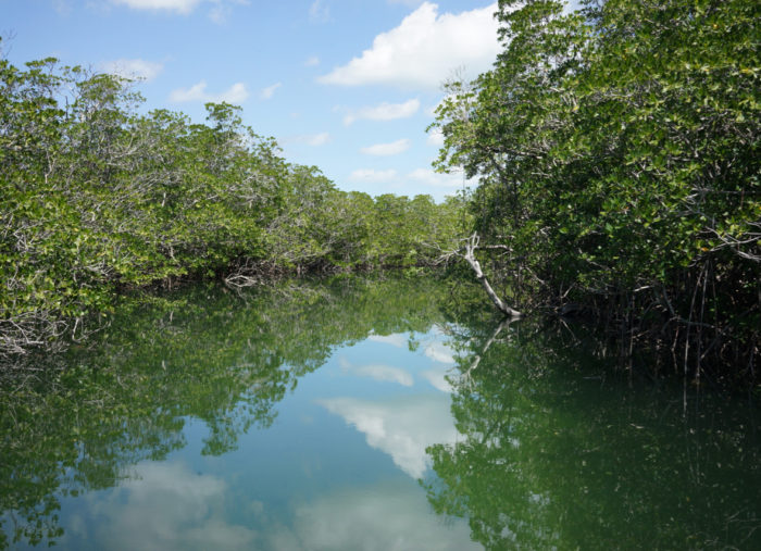 Mangroves & Mosquitoes