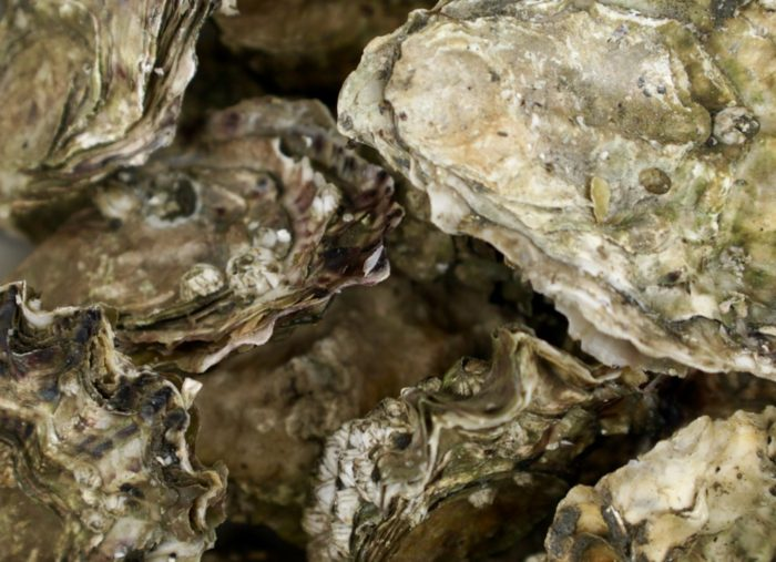Boomers & Bivalves